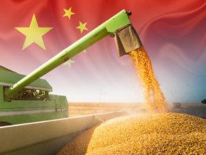 mercado de milho na china