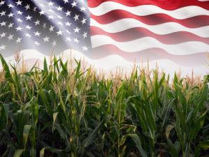 projeções do milho nos EUA